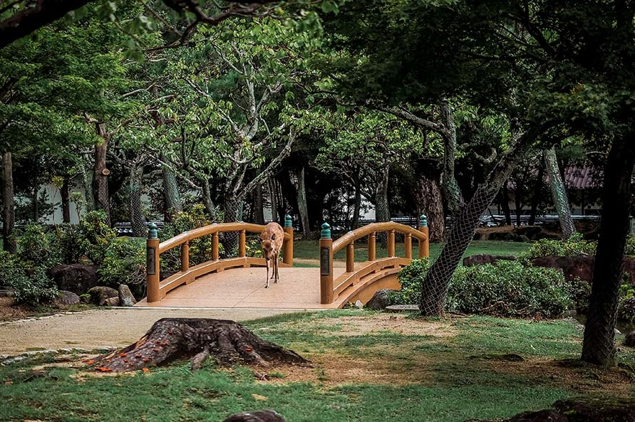 Brücken im Nara Park